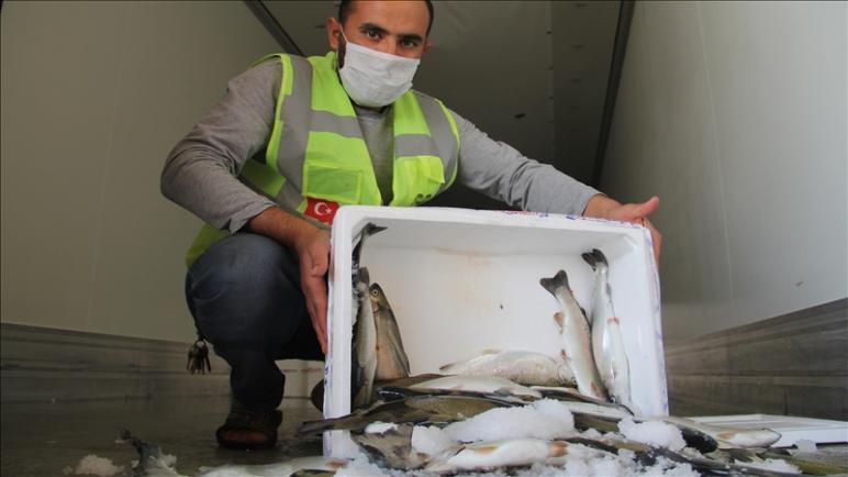 صورة مساعدات رمضان مستمرة .. جمعية تركية توزع أسماكا على العائلات السورية