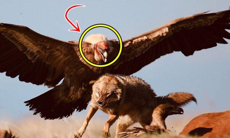 صورة لماذا وصف النبي محمد هذا الطائر بالفاسق.. إليكم قصته